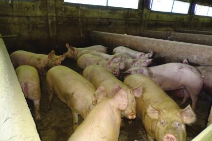 Procedure digitali per il benessere animale