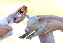 Ricetta elettronica veterinaria