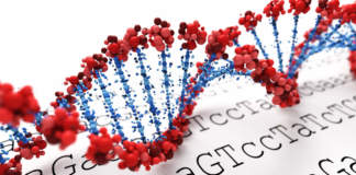 genetica italiana suinicola