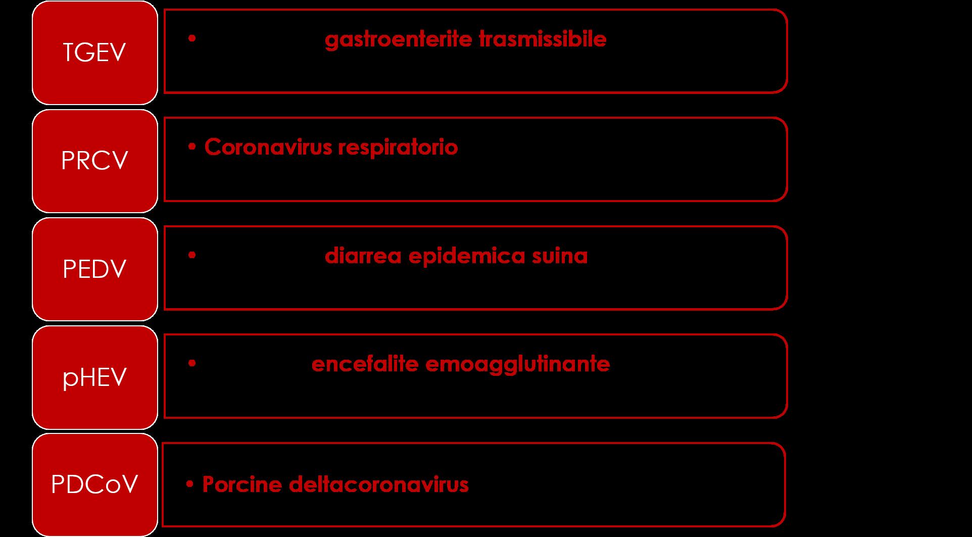 coronavirosi del suino