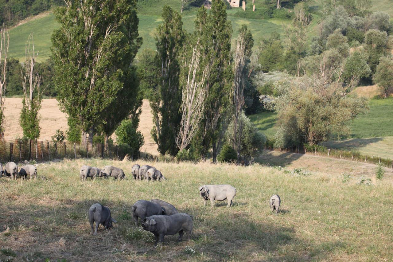 Nero di Parma